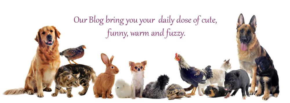 Mister Pet - Blog
