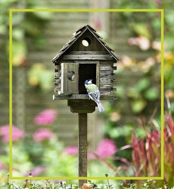 Mister-Per-Bird-House