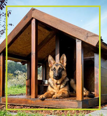 Mister-Pet-Dog-House