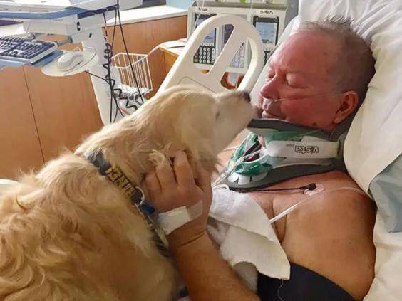 Dog saves owner's life in freezing conditions