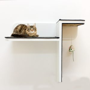cat climbing shelves dubai