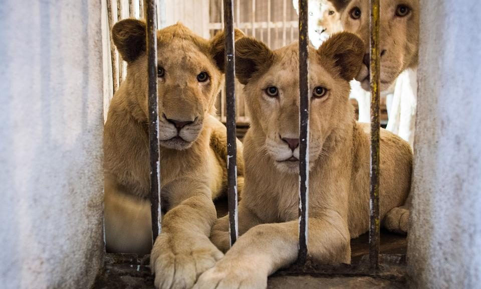 4 reasons why wild animals can't be pets in UAE