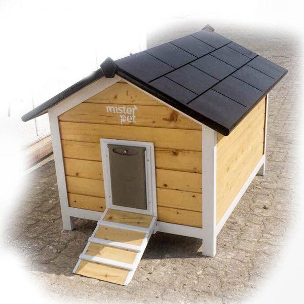 Cat house uae CH4001