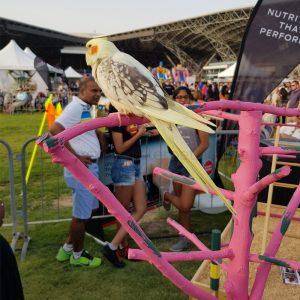 Bird Play Stand