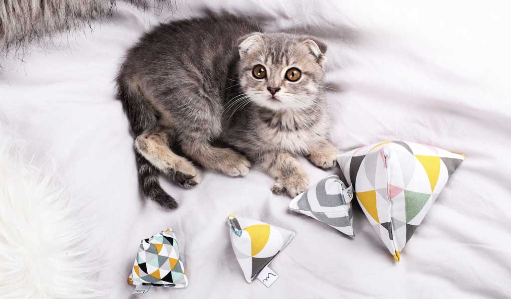 Gift Guide for Cats