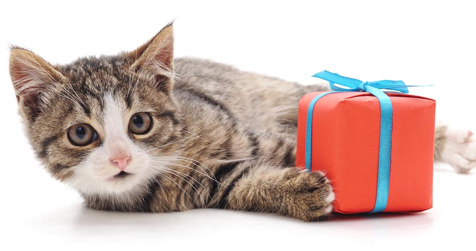 Mister Pet's Gift Guide for Cats